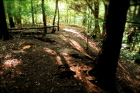 Forest2_2