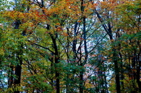 Forest_2
